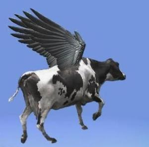 roncea Flying-cow
